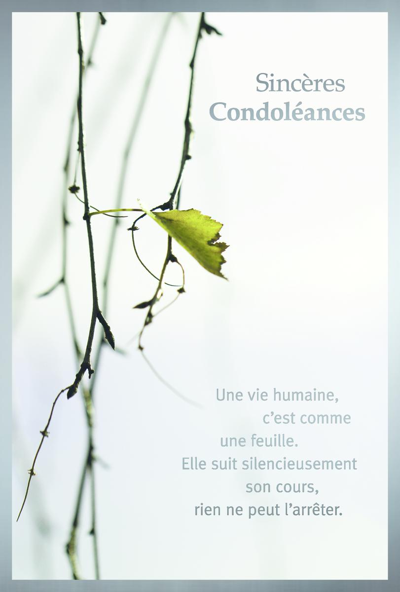 Abc Cartes De Condoleances Branches 11 7 X 17 2 Cm Fr